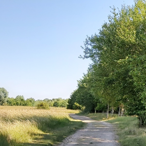 Marston Vale Forest